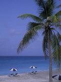 Beach Chairs  Caribbean Palms