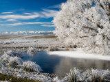 Frozen Pond and Hoar Frost on Willow Tree  near Omakau  Hawkdun Ranges  Central Otago  New Zealand
