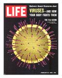 Viruses  Model of Flu Virus  February 18  1966
