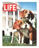 President Johnson's Beagles  June 19  1964