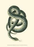 Vibrant Snake III