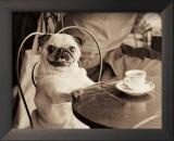 Cafe Pug
