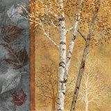 Birch Tree in Autumn I