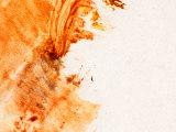 Brush Strokes in Vibrant Paint