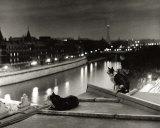 Paris  Cats at Night