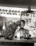 Child, Cat and Dove Reproduction d'art par Robert Doisneau