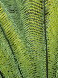 Tropical Plants  Maldives