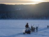 Winter Landscape  Reindeer and Snowmobile  Jokkmokk  Sweden