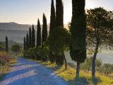 Country Road Towards Pienza  Val D' Orcia  Tuscany  Italy