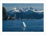 Alaska Passage Humpback Fin