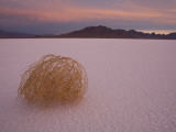 Tumbleweed on the Bonneville Salt Flats  Utah