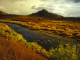 River Flows Through a Field in Autumn Color  Tombstone Territorial Park  Yukon Territory  Canada
