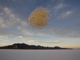 Tumbleweed in Mid Air over the Bonneville Salt Flats  Utah