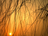 Sunset Peers Through the Branches of a Chinese Weeping Willow Tree  Beijing  China