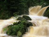 Ravenna Creek Rushing in Small Waterfalls over Mossy Rocks