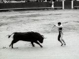 Toreador is Facing a Bull at the Center of a Bullfight