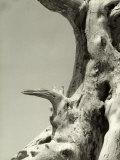 Weather-Beaten Tree Trunk