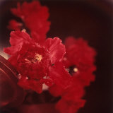 Close-up of Red Flowers Arranged in a Vase