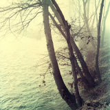 Tree Along a River in Foggy Weather During Autumn
