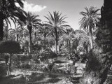 Garden of Palm Trees in Palermo
