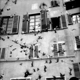 Pigeons in Flight in Front of a House