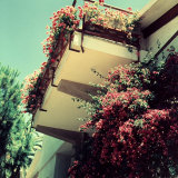 Balcony of an Apartment with Many Vases of Geraniums of Numerous Colors