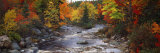 Stream with Trees in a Forest in Autumn  Nova Scotia  Canada