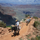 Tourists on Horseback Returning from Trekking in the Grand Canyon  Arizona  USA