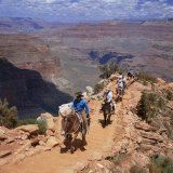 Returning on Horseback  Grand Canyon  UNESCO World Heritage Site  Arizona  USA