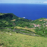 Cattle  Fields and Small Village on the Island of Flores in the Azores  Portugal  Atlantic  Europe