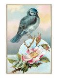 Bluebird on Rose Bush