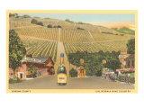 Sonoma County Vineyards  California