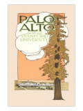 Palo Alto and Stanford University