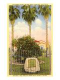 Parent Orange Tree  Riverside  California