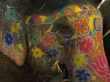 Painted Elephant  Used for Transporting Tourists  Amber Palace  Jaipur  Rajasthan  India