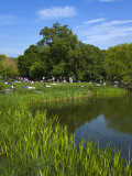 Turtle Pond Area in Central Park  New York City  New York  United States of America  North America