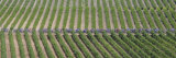 Peloton Rides Through Vineyards in Third Stage of Tour de France  July 6  2009