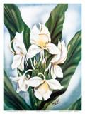 Hawaiian White Ginger  c1940s