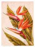 Hawaiian Bird of Paradise  c1940s