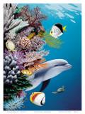 Dolphin's Reef  Hawaii