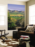 Vineyards  Barossa Valley  South Australia  Australia