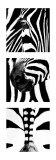 Zebra Tryptich