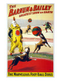 Clown Perform with the Marvelous Foot-Ball Dogs in the Barnum and Bailey Circus  1900