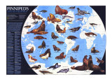 1987 Pinnipeds Around the World Map