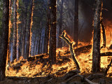 Forest fire caused by lightning in Custer State Park