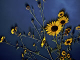 Wildflowers blooming on the Kansas prairie