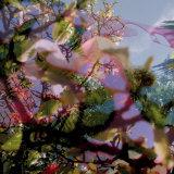 Vegetaux 11  2008