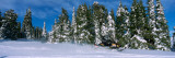 Snowmobiling in Yellowstone National Forest  CA