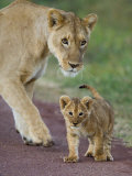 Close-up of a Lioness and Her Cub  Ngorongoro Crater  Ngorongoro Conservation Area