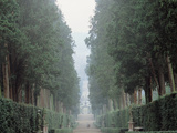 "The Walk in the Boboli Gardens Know as the ""Viottolone"""